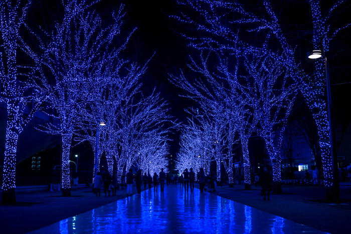 渋谷の並木を青色の電球で照らした「青の洞窟 SHIBUYA」は、イタリア屈指の観光名所「青の洞窟」をイメージしたイルミネーションです。幻想的な青色の電球で装飾された並木道のトンネルに足を踏み入れるとは、まるでイタリア・カプリ島にある「青の洞窟」内部に入り込んだような気分を覚えます。
