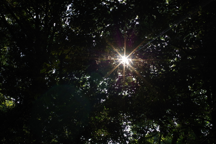 境内には、長い時間をかけて植樹された豊かな森が広がっています。明治神宮は、都心にあるオアシスのようなで、森林浴スポットとしても人気があります。