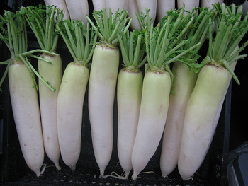 一年中スーパーで見かける大根は、いつが旬なのか分からないという方もいらっしゃるようですが、一般的には「春大根」と「冬大根」に分けることができます。春大根は辛みが強く、冬大根は甘みが強いのが特徴です。生食に人気に赤大根や、煮物にするとおいしい聖護院大根など、様々な品種があります。  ◆大根の選び方 ・葉っぱが鮮やかな緑色のもの ・ずっしりと重みがあるもの ・実に張りとつやがあるもの  ※カットした大根を買う場合は、断面のきめが細かく「す」が入っていないものを選びましょう。