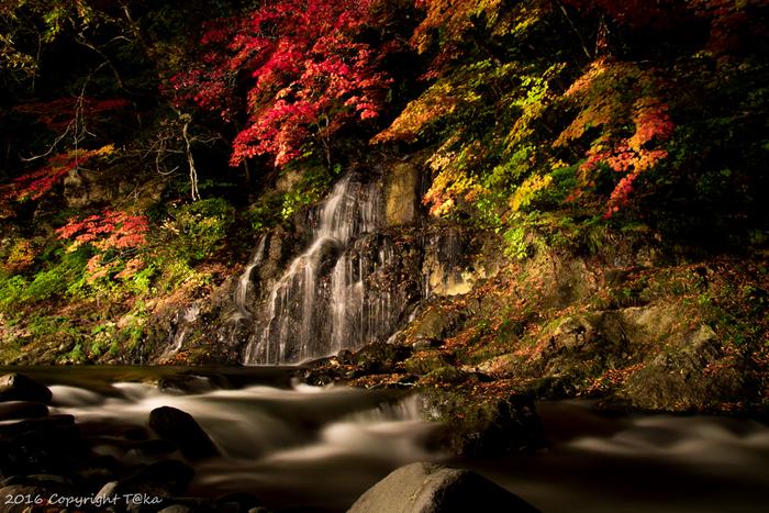 本州最北端の青森県。ユネスコの世界自然遺産に登録されている「白神山地」をはじめ、津軽富士と呼ばれる「岩木山」、豊かな水と木々が生きる「奥入瀬渓流」「薬研渓流」など多くの自然があり、秋には県内各所で見事な紅葉を楽しむことができます。