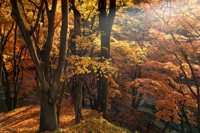 利根川の流れが造り出した渓谷「諏訪峡」。流れに沿って遊歩道が整備されているので散策を楽しみます。四季折々の自然の美しさを満喫してください。11月には美しい紅葉が見られます。
