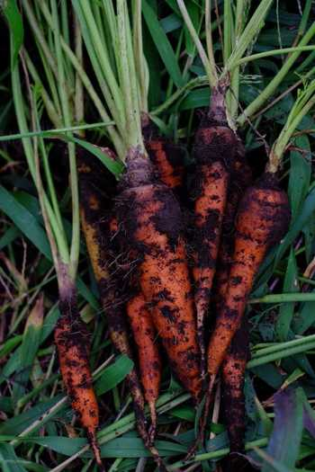 ぴたらファームでは、自然のリズムに沿い、無農薬、無化学肥料で野菜作りを行っています。「資源循環」「自家採種」を大切にすることで、生態系だけでなく土壌も多様になることを目指しています。