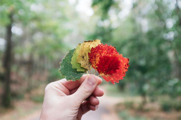 """歩きながら綺麗な落ち葉を見つけたら、""""しおり""""代わりに使ってしまいましょう。こんな思いがけないアートな楽しみに出合えるのも、公園ならではですね。"""