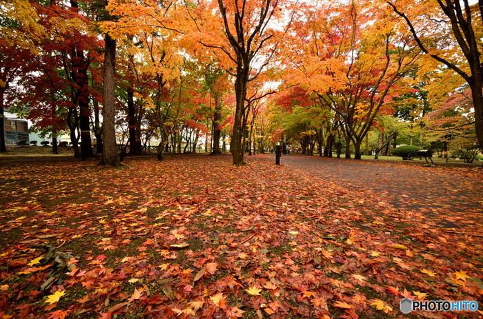 11月の函館では、このように色鮮やかな落ち葉のじゅうたんがお目見えします。とってもきれいなんですよ。早ければ11月初旬には初雪が降り、紅葉の終わりが近づくにつれて日に日に寒さが強くなっていく季節です。