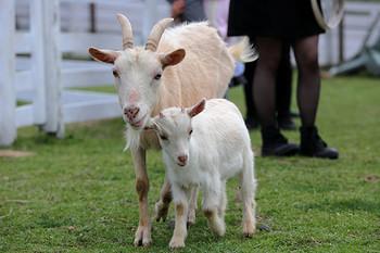 広い園内を散策したり、餌をあげたり牛の乳搾りやポニーの引き馬など動物たちと触れ合えますよ。