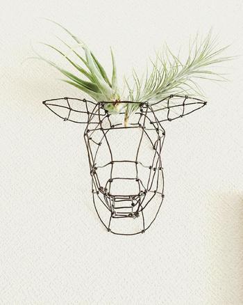 鹿のトロフィーオブジェをワイヤーでDIY。エアプランツとワイヤーといった異なった素材感のアイテムが洒脱なセンスで組み合わされた作品。