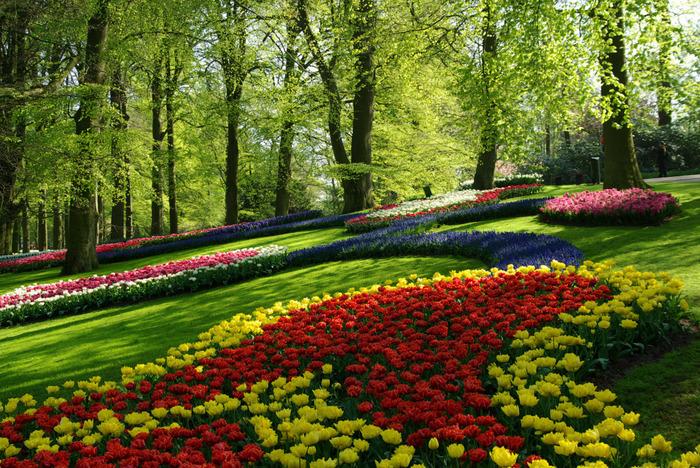 3月中旬~5月中旬までと期間限定で公開されるキューメンホフ公園は、お花がいっぱいでまるで夢の世界のような世界一有名なフラワーパークです。アムステルダム市内からは電車とバスを乗り継いで1時間半程度、オランダの国際空港であるスキポール空港から期間中は直行バスで約30分ほどのところにあります。