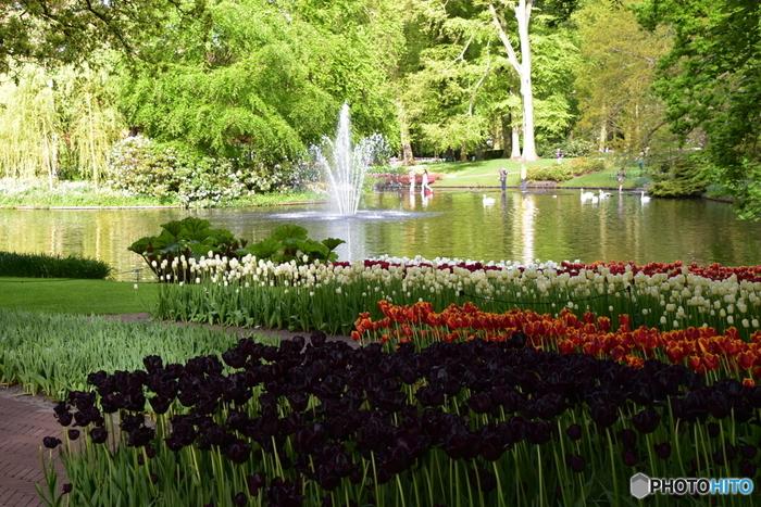 チューリップを始めとするお花の球根はなんと約700万個も植えられているそうです。色とりどりのカラフルなお花たちがお出迎えしてくれますよ。中には日本ではなかなかお目にかかることができない、黒いチューリップの姿も!そんな珍しい品種を探しながらの好奇心いっぱいの散策もいいですね。