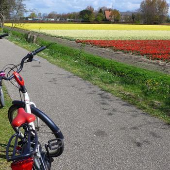 オランダは自転車大国とも言われるほど自転車が身近ですが、園内でも自転車がレンタルできます。東京ドームおよそ7個分の広い敷地なので、すいすいと自転車で回れると助かりますね。