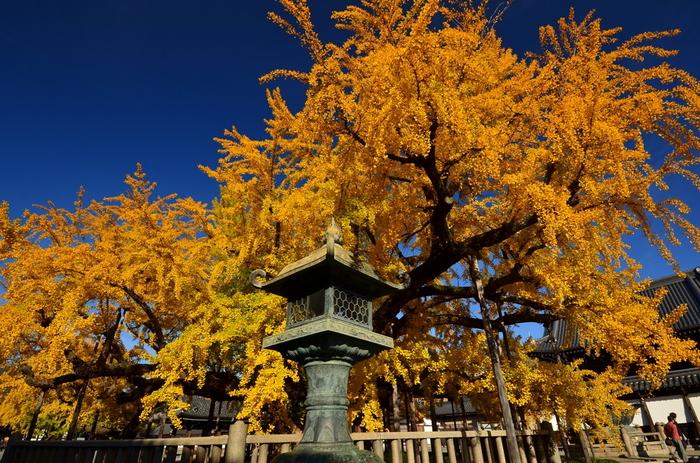 西本願寺といえば、京都市の天然記念物に指定されている樹齢約400年の大銀杏が有名ですが、「薫玉堂」も創業以来、420余年に渡りその時代の香りを作り続けています。