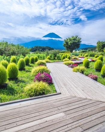 河口湖北岸にある大石公園(おおいしこうえん)は、四季折々の美しい草花と富士山を同時に楽しめるビューポイント。特に初夏のラベンダーと秋のコキアの紅葉が人気です。