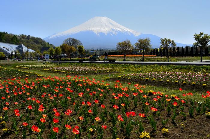 30万平方メートルのエリアに季節の花々が咲く「花の都公園」。水車がある、水と花のテーマパーク「清流の里」や冬でも花が楽しめる温室「フローラルドームふらら」もあります。