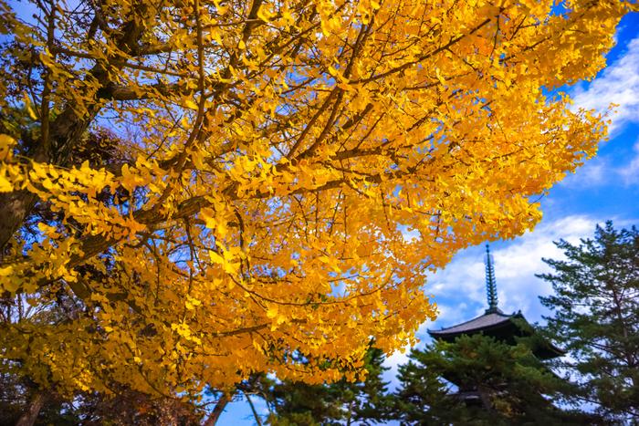 興福寺(こうふくじ)の「五重塔(ごじゅうのとう)」は、古都奈良を象徴する国宝の塔。境内の大きな銀杏の木や近くの猿沢池から眺めた五重塔も趣があります。