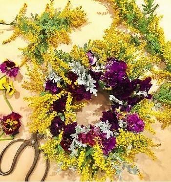 大輪のパンジーは、ブーケやリースに活気を演出してくれます。 こちらは直径10cmにもなるムーランフリルルージュという品種。ベルベットのような深い紫の花びらが補色関係にあるミモザを引き立てて、春を先取りするリースができあがりました。