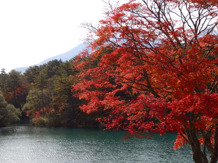 秋になると、毘沙門沼周辺の木々の葉が赤く色づきます。磐梯山と一緒に見る紅葉は、うっとりしてしまうほどの美しさです。
