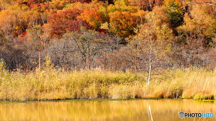秋になると、一気に木々の葉が紅葉と化します。赤や黄など、様々な色に変わる赤沼の紅葉は必見ですよ。