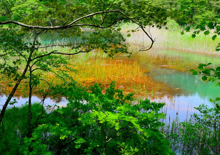 深泥沼は、緑や黄色、赤色の3色に色づいた美しい湖沼。同じ沼の中で色が異なるのは、水質や水の深さが関係しているそうです。