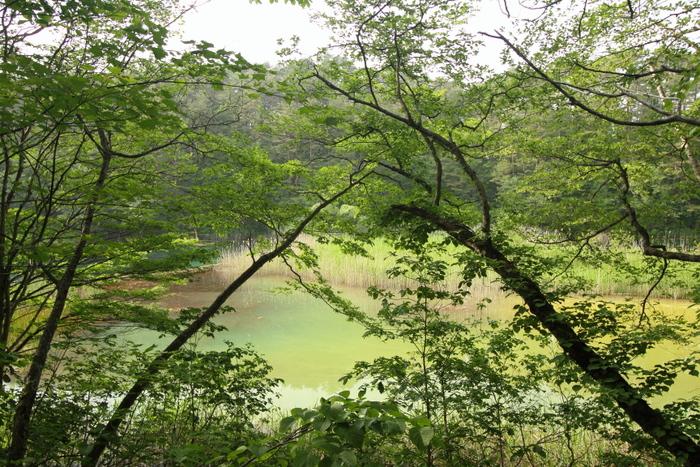 時期によっては、緑一色に見えることも。訪れるたびに、違う顔を持つ深泥沼に出会えるかもしれませんね。