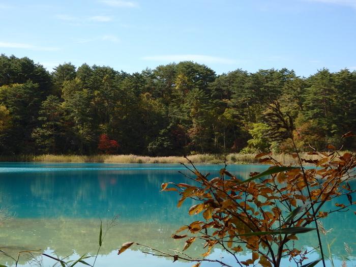 瑠璃沼は、場所によって色が変わる湖沼として知られています。その色づきは、この湖沼に設置されている展望台から見るとよく分かるのだとか。