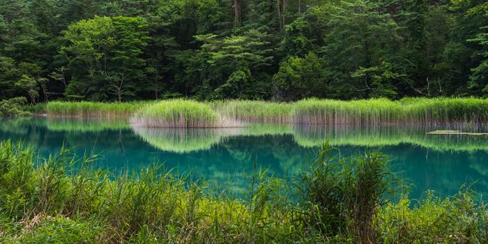 明るめの青色に色づいた湖沼と周辺の木々の色などが合わさって、とても不思議な光景を見ることができる瑠璃沼。五色沼の中でも、ミステリアスな湖沼です。