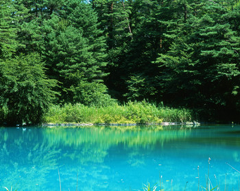 青沼は、青と白が混ざった色に染まる湖沼。五色沼の中で最も小さいといわれていますが、その色の美しさは圧巻です。