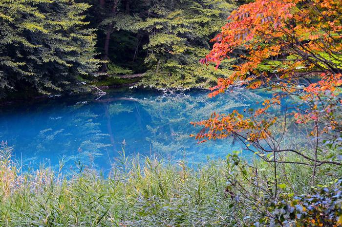 青沼は明度が高く、神秘的。水底に育った苔の緑と太陽光があいまって、コバルトブルーの様な色に光ります。天候や時間帯によっても色が変わる言われており、訪れる時間を変えて観賞するのも楽しいかもしれませんね。