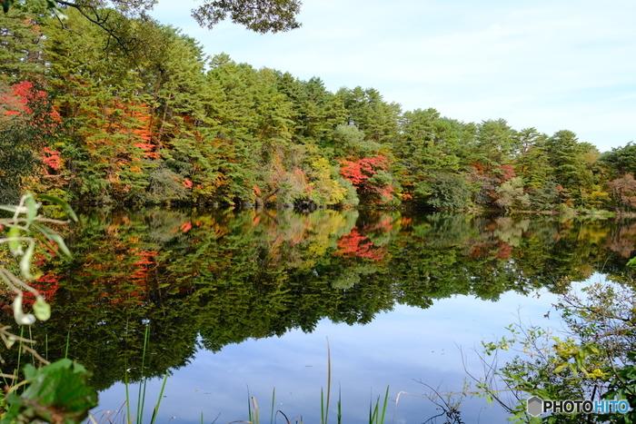 柳沼は、毘沙門沼と弁天沼に次ぐ広さを持つとても静かな湖沼です。