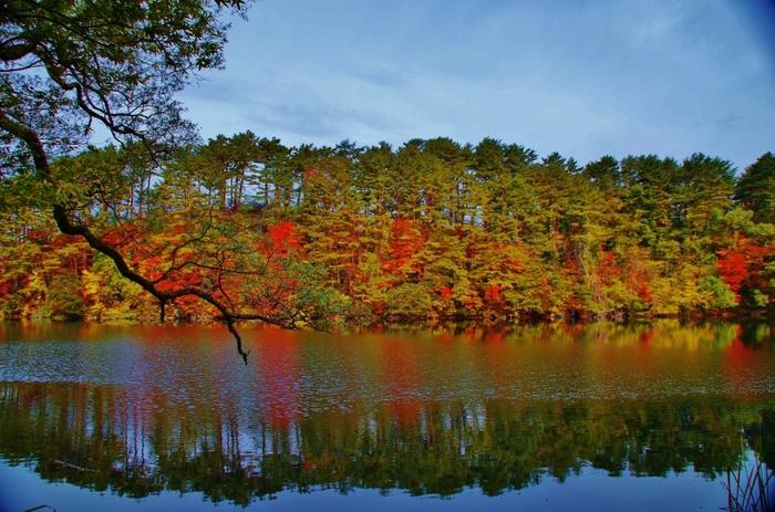 柳沼の最大の魅力は、紅葉。五色沼の中で、最も美しい紅葉を見ることができると有名です。もみじやかえでなど色々な種類の木々が植えられ、個性あふれる紅葉を楽しめます。紅葉シーズンにぜひ訪れてみたいですね。