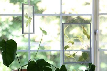 クリアフィルムに植物がプリントされた透明ポスターは、本物のような植物のはかなさを感じます。