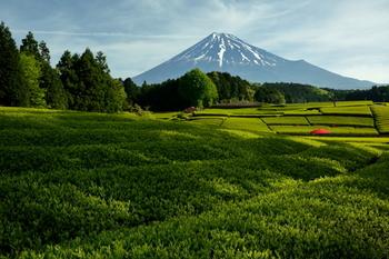 全国一位の茶畑を誇る、お茶のまち「静岡県」。今回は、お店の方が厳選した美味しい静岡茶がのめるカフェをご紹介します。スイーツやお食事もお茶三昧で楽しみましょう♪
