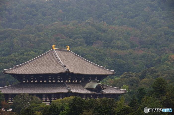 「奈良の大仏さま」で有名な、高さ約15メートルの盧舎那大仏(るしゃなだいぶつ)が安置されている東大寺大仏殿(とうだいじだいぶつでん)。大仏殿を支える柱の中に穴があいた柱があり、そこをくぐると無病息災のご利益があるといわれています。