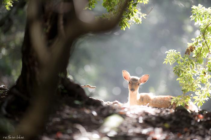古い歴史と趣がある「奈良」、かわいい鹿がいる「奈良」へ、ほっこり旅にでかけませんか。久しぶりに訪れてみると、新しく発見する「奈良」の魅力がたくさんありそうですね。