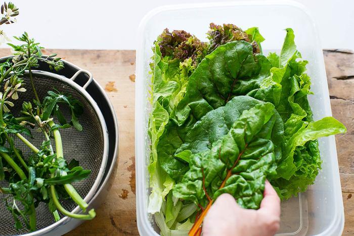 水洗いしてから保存したいときの方法は…水滴がつくようにざっと水洗いをして、密閉容器にふんわり入れます。 あとは、冷蔵庫で保存するだけ。 パクチーやフリルレタスのような柔らかな葉の野菜も、密封容器保存で数日間はパリパリ♪