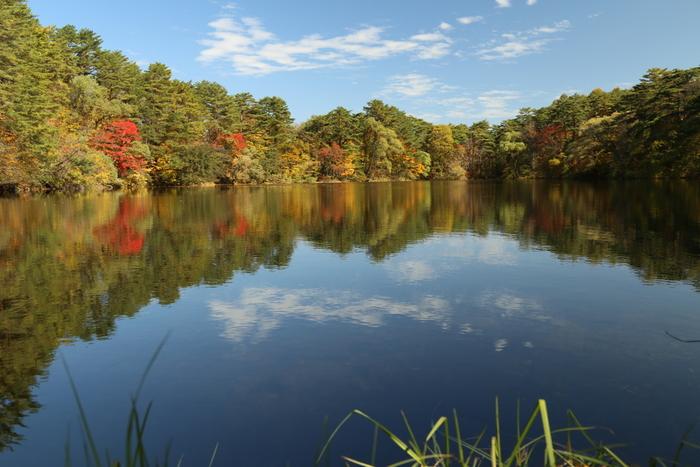 五色沼を巡るには、「五色沼自然探勝路」というトレッキングコースを利用するのがおすすめ。1時間10分ほどかけて、主要の湖沼を散策できます。ここでは、五色沼自然探勝路に含まれる、五色沼の代表的な湖沼をご紹介しましょう。