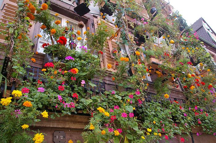 バルコニーや出窓には、色とりどりの花々が飾られており、街並みの美しさを引き立てています。