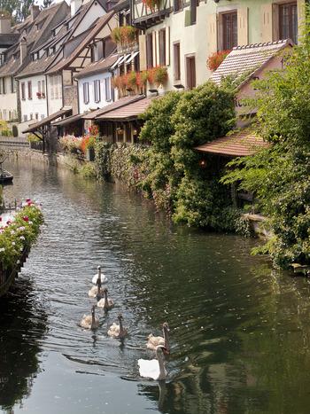 時期によっては、ハクチョウなど水鳥が運河で優雅に泳いでおり、プティット・ヴニーズの魅力を引き立てています。