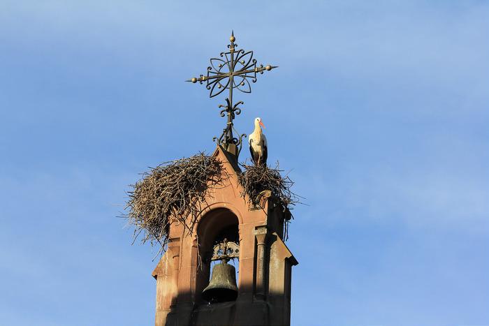 エギスアイムには、アルザス地方のシンボルとなっているコウノトリの巣がたくさんあります。運が良ければ、教会や民家の煙突に作られた巣で子育中のコウノトリに逢えるかもしれませんね。