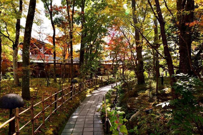 歴史ある温泉旅館「由布院玉の湯」。昭和28年の創業から現在に至るまで多くの顧客の心を離さない、湯布院を代表する自然あふれるお宿です。