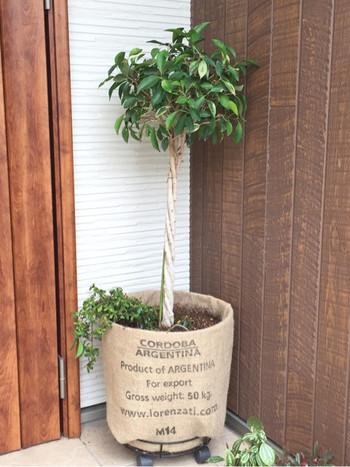 プラスチックの植木鉢はちょっと味気ない。でも、麻袋でおおうだけでお洒落でかっこいい植木鉢に変身です。