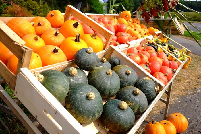 かぼちゃには、ビタミンCやβカロテンが豊富に含まれており、風邪予防に効果があるといわれています。「冬至にかぼちゃを食べると風邪知らず」という言い伝えもあるほど。かぼちゃには冬に嬉しい栄養素がたくさん◎
