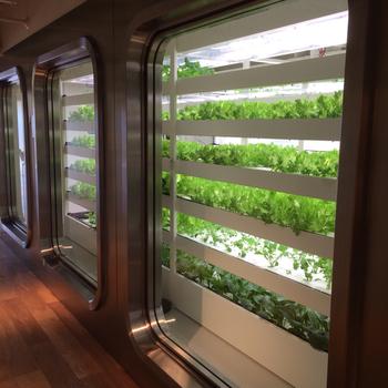 CAFE Styloの野菜は11階の「FARM」で栽培された「銀座産」。土を使用しない水耕栽培で、毎日新鮮な野菜を収穫してレストランで調理しています。  ちなみに「FARM」の様子は11階で見ることができますよ。