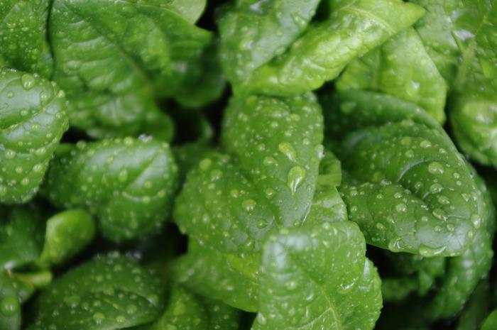 「小松菜」や「ほうれん草」も冬が旬の野菜。旬の野菜は栄養も豊富なので積極的に摂りたいですよね。 小松菜はカルシウム、ビタミンA・C、ほうれん草はβカロテンやビタミン・鉄分がたっぷり。風邪予防の効果も期待できます。