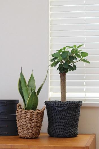 大きな鉢植えは、家具の上に置くと傷つきそうだし、無機質な鉢のままでは味気ない…。そんな時には、お気に入りの鉢カバーでオシャレに演出してみましょう。 寒さが本格的になるこれからの季節、マクラメの大きな編み目がインテリアに温かさをプラスしてくれそうです。