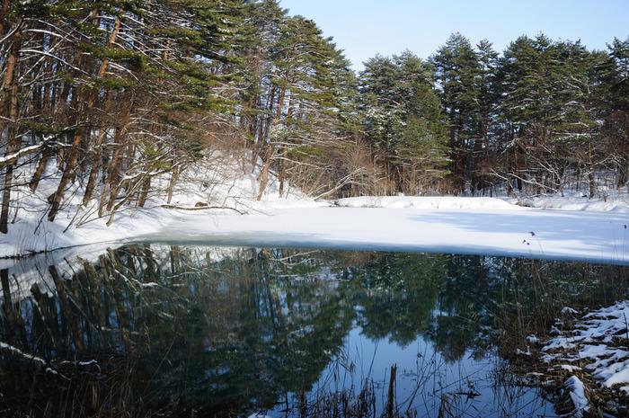 青沼は、冬になっても美しさは健在。湖沼の周りの木々が水面に映り、澄んでいるのが分かります。季節問わず、綺麗な風景を楽しめるところです。