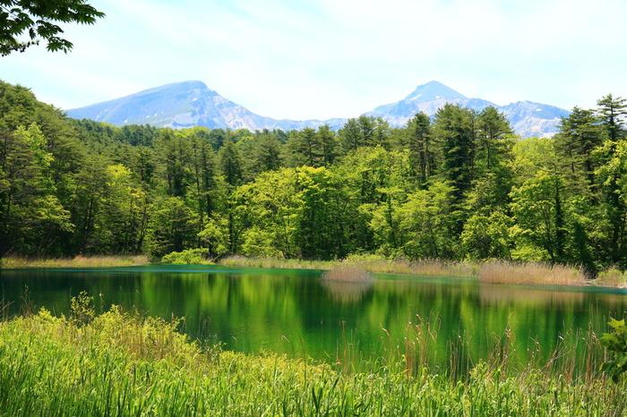五色沼は、裏磐梯(うらばんだい)にある五色沼湖沼群(ごしきぬまこぬまぐん)と呼ばれる複数の湖沼の総称です。なぜ「五色沼」という名前がついたのかというと、エメラルドグリーンやコバルトブルーに神秘的に染まる湖沼が存在するから。特に、晴れた日には、色どり豊かで美しい湖沼を楽しむことができます。