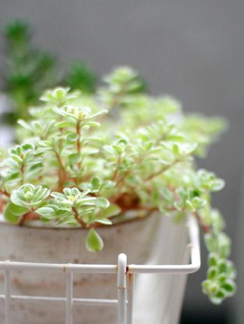 いかがでしたか? 普段、過ごすことの少なかったベランダも、可愛い雑貨や、お洒落な収納を取り入れながら、ベランダガーデンにしてみると、日々の暮らしが、ちょっと楽しくなりそうですよね。植物の様子を観察したり、風を感じながらティータイムしたり…自分だけの癒しの時間を作ってみませんか?