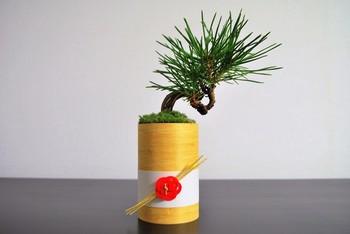 曲がった幹が小さいながら勇ましい黒松のミニ盆栽。木製の器と水引きとの相性がバツグン。お正月にもピッタリですね。