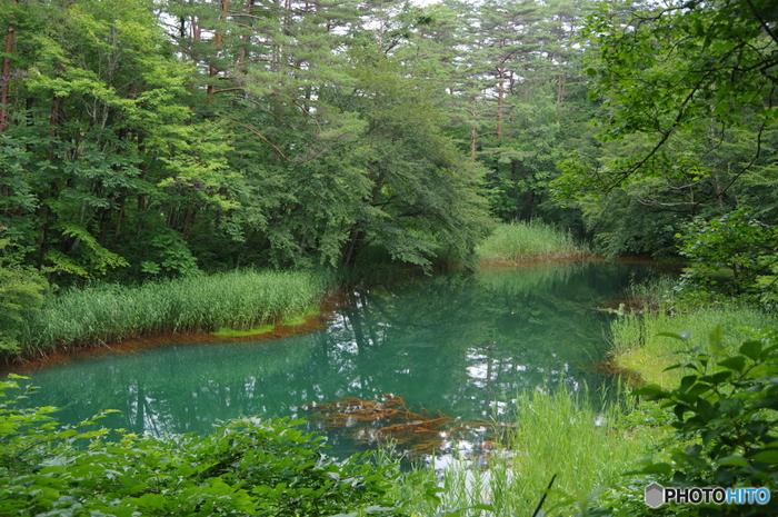 赤沼は、季節によって違う色を見せる湖沼。赤沼と呼ばれるのは、周辺の木々に酸化した鉄がつき、それが映えて赤く見えるからなのだとか。