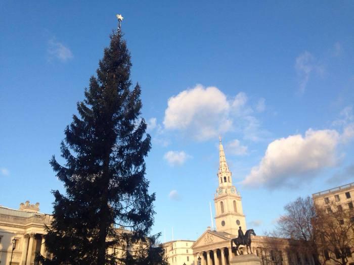 1947年以降、毎年ノルウェーから送られているトラファルガー広場のクリスマスツリー。世界大戦の際に、イギリスがノルウェーを援助した感謝の意味が込められているのだそう。