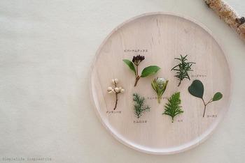 使うのは端材になるような小枝や葉。左上から時計回りに、ビバーナム・ティヌス、ローズマリー、ユーカリ、ヒバ、リューカテンドロン、ヒムロスギ、ナンキンハゼ。
